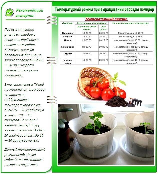 Высадка семян помидор в домашних условиях