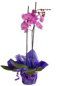 Комнатные цветы для счастья и благополучия