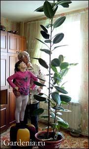 У кого в домашних условиях растут грибы