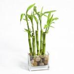 Комнатные растения приносящие любовь